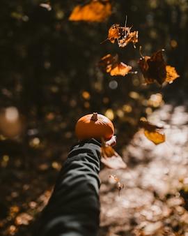 Tiro vertical de uma pessoa segurando uma abóbora durante o outono
