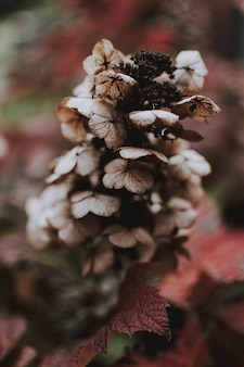 Tiro vertical de uma planta marrom com fundo desfocado natural