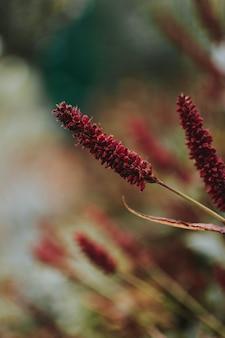 Tiro vertical de uma planta vermelha com fundo desfocado natural