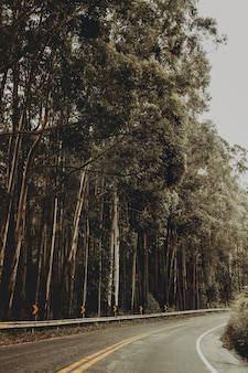 Tiro vertical de uma rodovia cercada por uma floresta cheia de finas árvores verdes