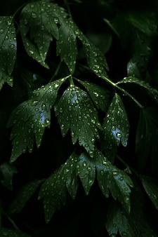 Tiro vertical do close up das folhas verdes frescas com muitas gotas de orvalho nelas