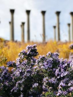 Tiro vertical do close up de lindas flores lilás em um campo com grandes pilares no fundo