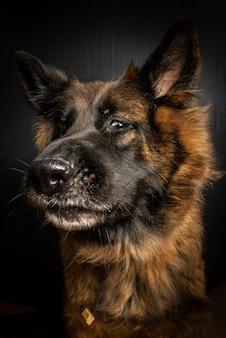 Tiro vertical do close up de um cão marrom