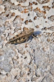 Tiro vertical do close up de um inseto da efemérida em um chão arenoso