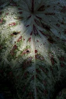 Tiro vertical do close up de uma folha com gotas da água nela