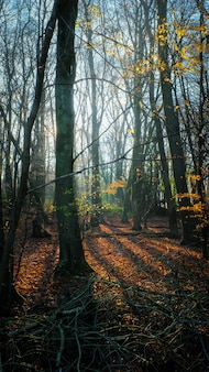 Tiro vertical do sol brilhando sobre uma floresta de outono
