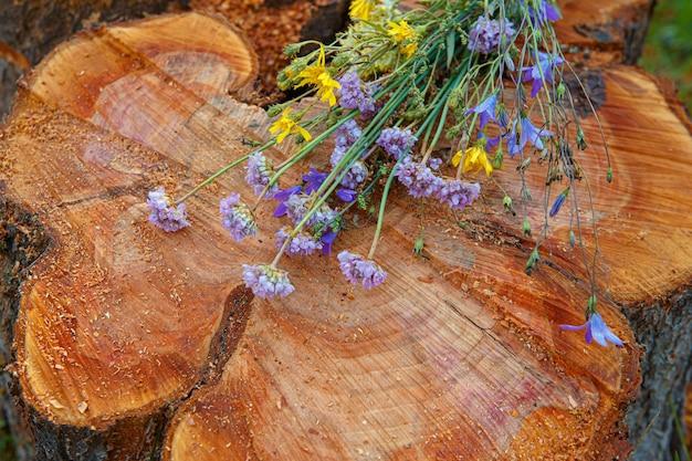 Toco de árvore derrubado - seção do tronco com anéis anuais e flores silvestres