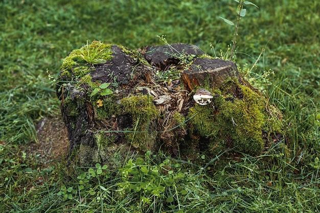 Toco de árvore musgosa na grama verde, superfície de verão