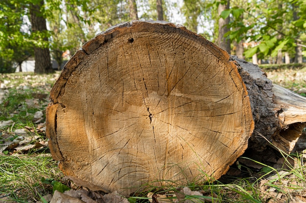 Toco de árvore no parque da cidade