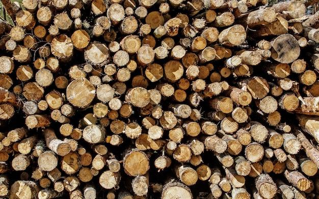 Toco de árvore, toras em texto de madeira