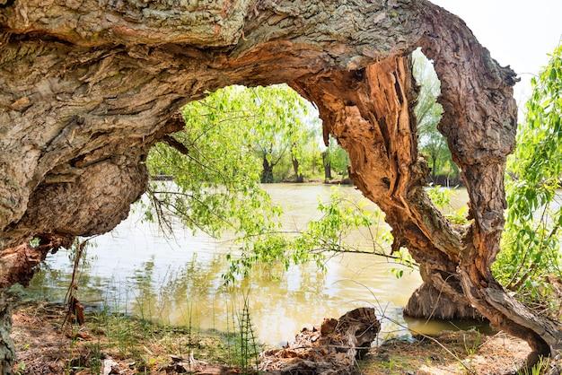 Toco de árvore velha com raízes de madeira na água