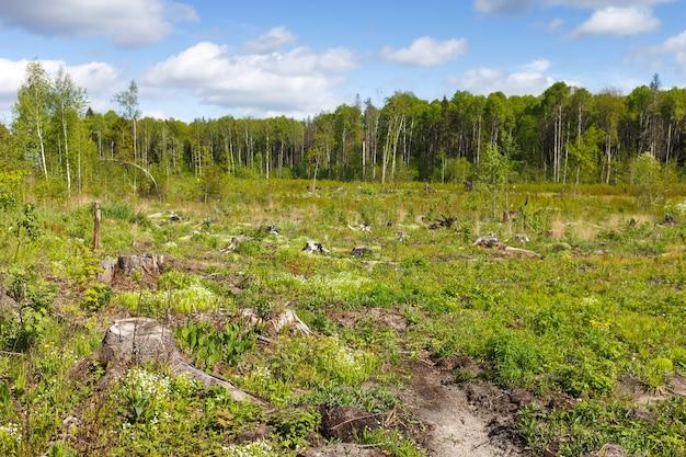 Toco de corte de madeira após desmatamento hackear floresta