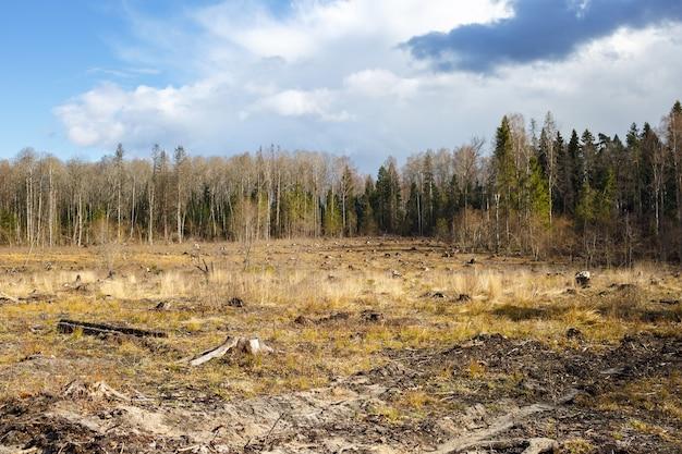 Toco de corte de madeira após desmatamento