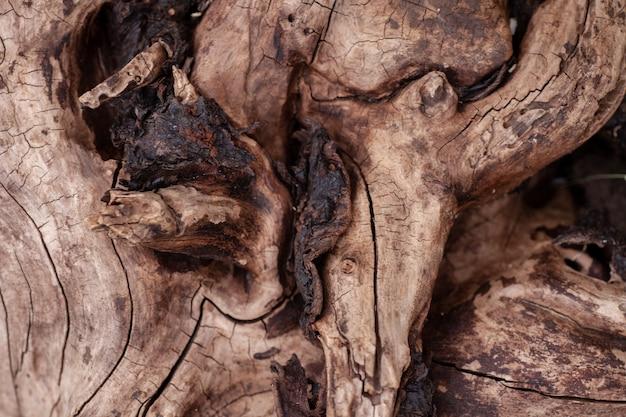 Toco podre velho toco de perto com pouca luz na floresta com textura de madeira close-up