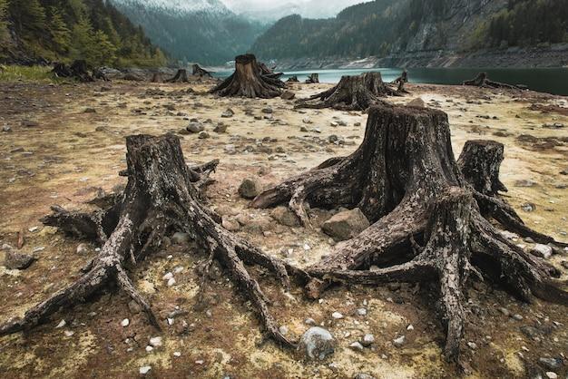 Tocos de árvores após o desmatamento localizados ao redor do lago alpino na áustria