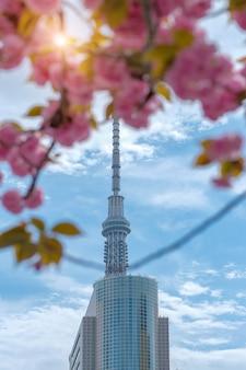 Tokyo sky com flores de cerejeira em plena floração