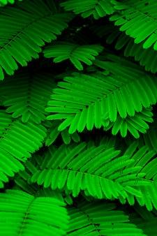 Tom de folha verde mini na natureza