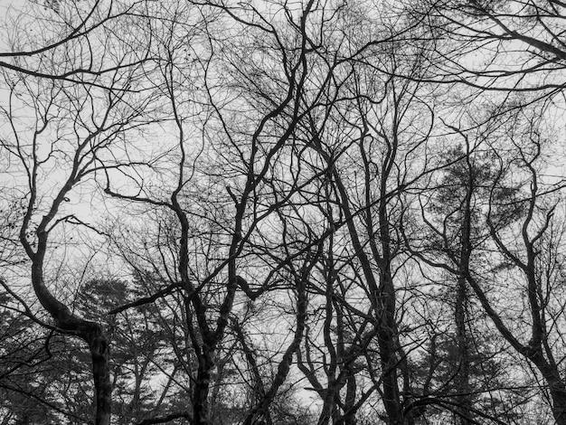 Tom preto e branco - árvores no outono