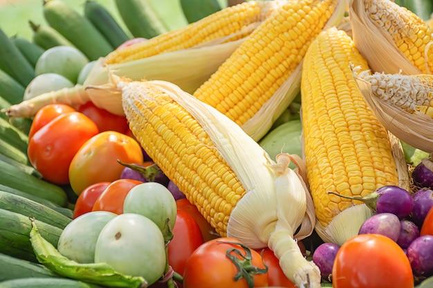 Tomate e milho a vegetação nativa da tailândia