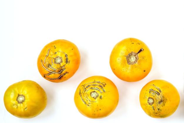 Tomates amarelos orgânicos grandes e feios na moda em um fundo branco, orientação horizontal