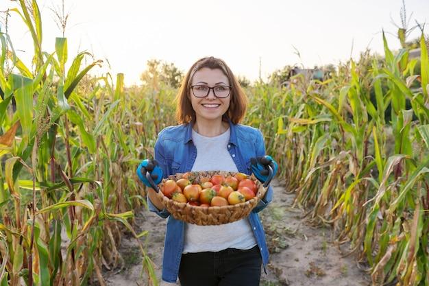 Tomates frescos e rasgados do jardim na cesta. mulher jardineira, hobby e lazer cultivando vegetais de alimentos orgânicos. horta verão outono, canteiros com milho