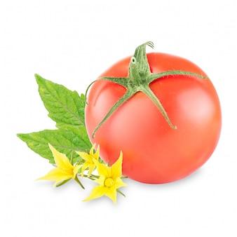 Tomates maduros com folhas em branco