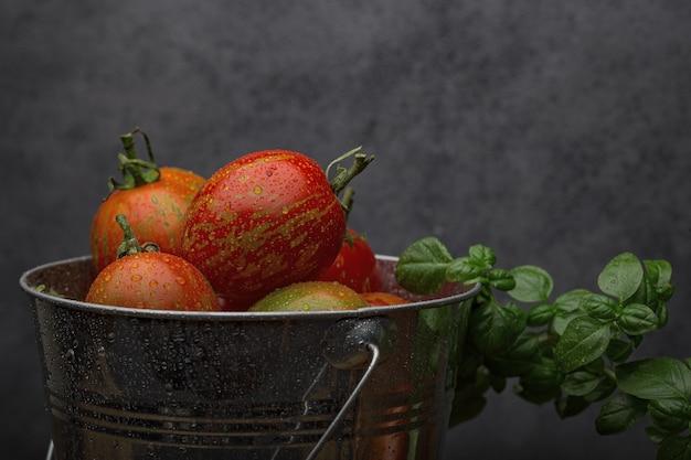 Tomates maduros frescos e erva de manjericão em um balde de metal molhado depois da chuva. parede escura.