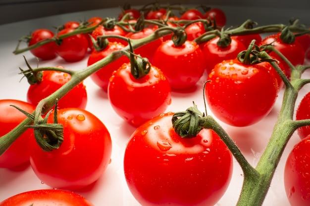 Tomates maduros naturais em um galho