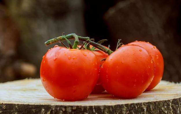 Tomates molhados na videira. gotas com uma bela reflexão. concentre-se nas gotas.
