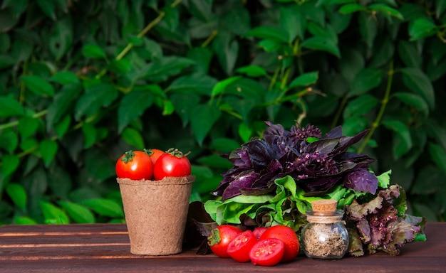 Tomates suculentos no balde de papel e verdes para salada, legumes frescos.