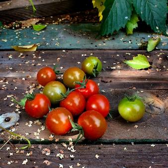 Tomates vermelhos jardim