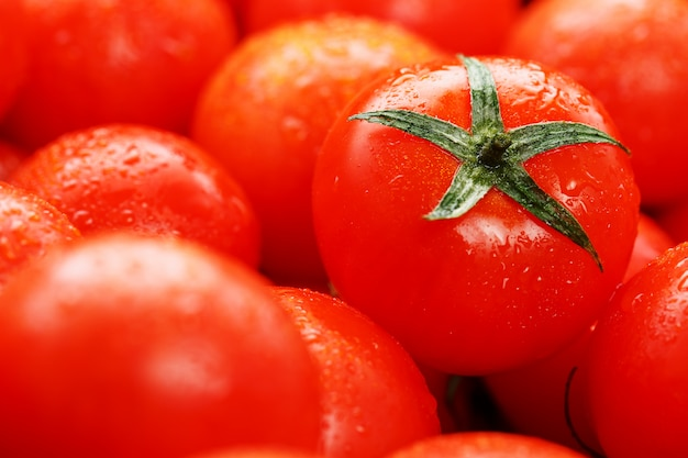 Tomates vermelhos maduros, com gotas de orvalho.