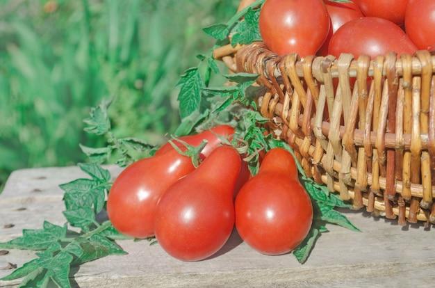 Tomates vermelhos maduros frescos em uma cesta no jardim