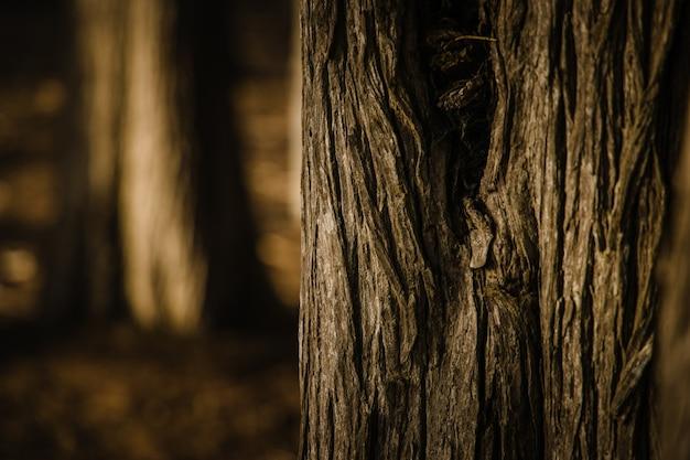 Tons de cinza do tronco da árvore