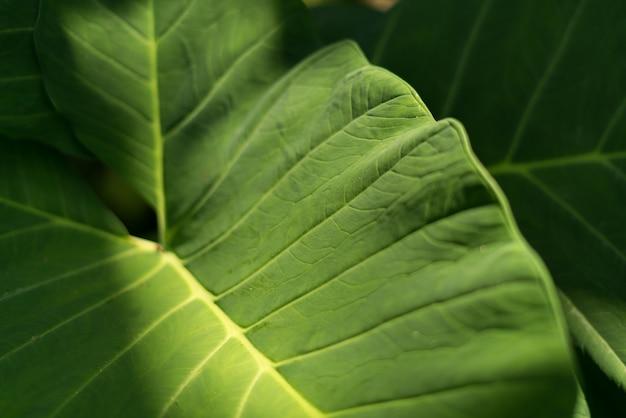 Tons de luz solar de manhã na folha verde