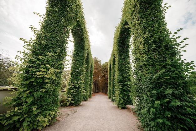 Topiary verde da arcada do buxo no fim ensolarado do parque. foco seletivo