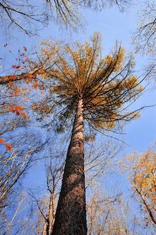 Topo de uma árvore de outono com folhas de outono contra um céu azul