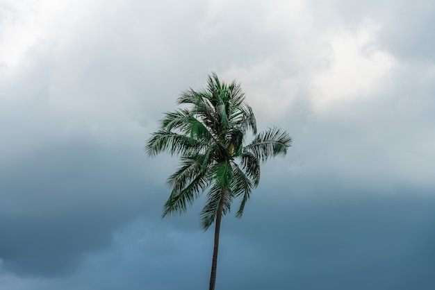 Topo de uma solitária palmeira verde com céu escuro