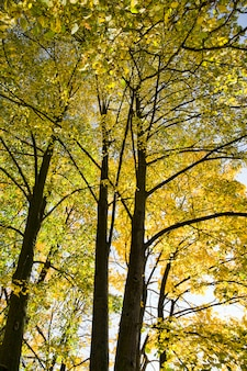 Topo e copa das árvores