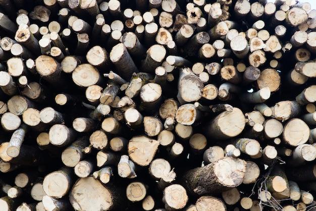 Toras de faia, parque nacional, madeira serrada da floresta. material de madeira