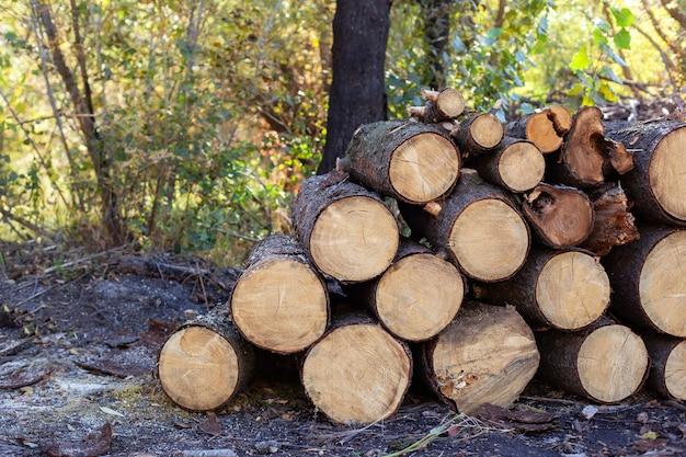 Toras de madeira com floresta