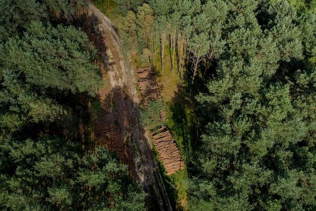 Toras de madeira de uma floresta de pinheiros