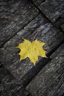 Toras de madeira de uma velha casa. o telhado é feito de pranchas de madeira com uma folha de bordo amarela. cinza natural textura de madeira resistida. fundo. foto vertical horizontal. foto de alta qualidade