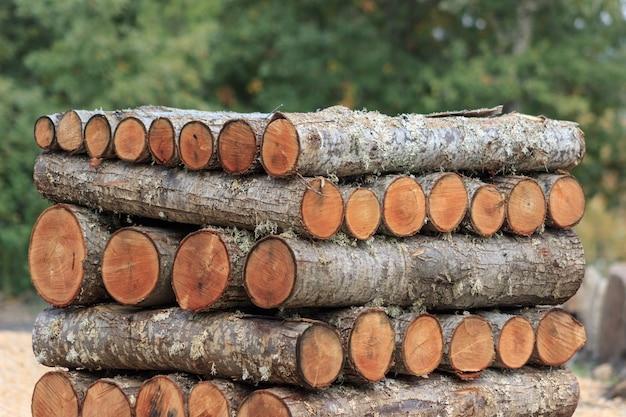 Toras de madeira empilhadas na floresta