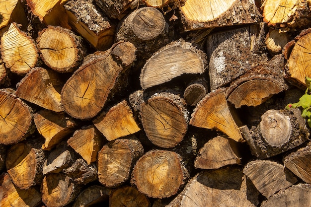 Toras de madeira empilhadas para lenha.