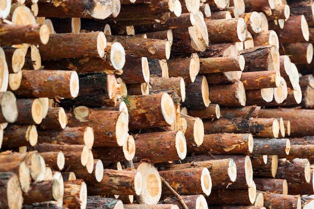 Toras de pinheiro serradas colhidas na floresta para a indústria de madeira, meia distância