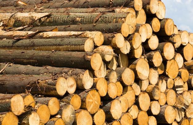 Toras de pinheiro