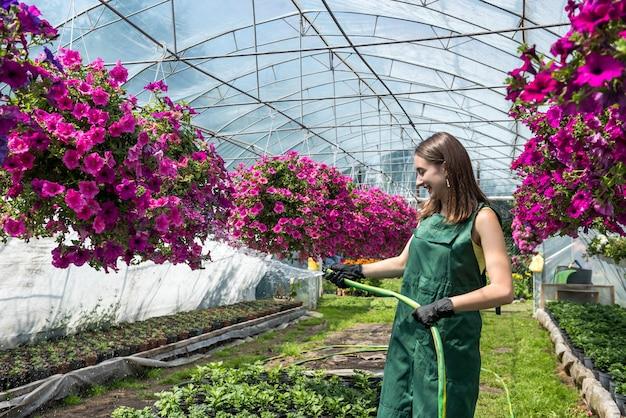 Trabalhador com efeito de estufa no avental regando plantas em sua estufa. trabalho duro todos os dias que cria beleza