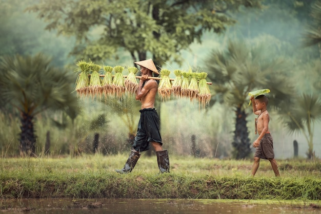 Trabalhador de agricultor de tailândia