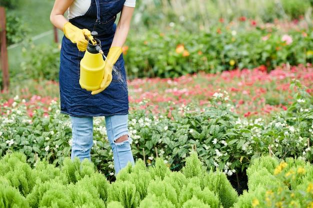 Trabalhador de jardim pulverizando brotos de cipreste